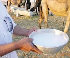 الفوائد الصحيه لحليب الابل